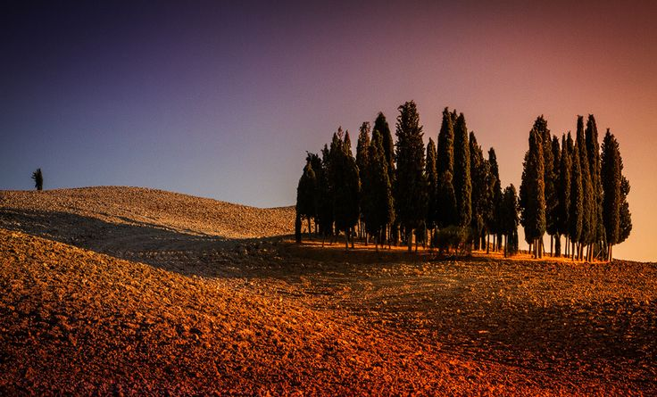 tuscanian evening - null