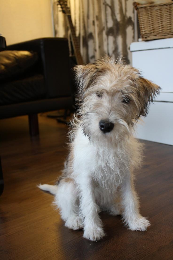My Dog Fanny