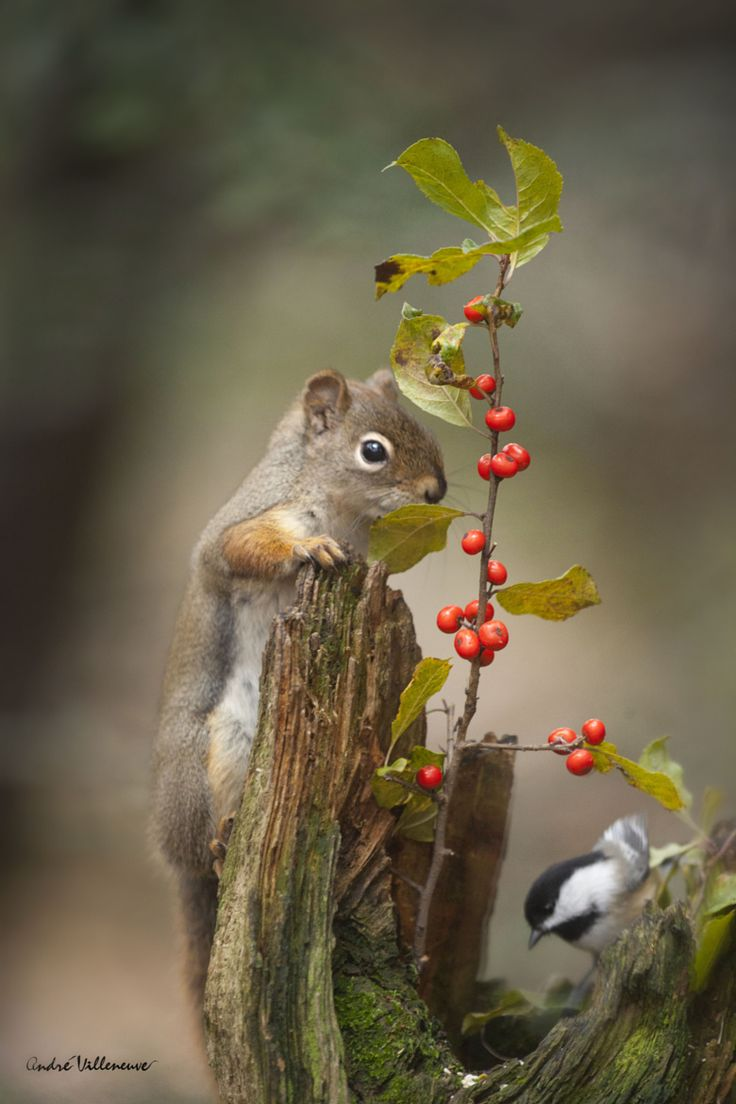 magicalnaturetour:Never far from each other by Andre Villeneuve / 500px