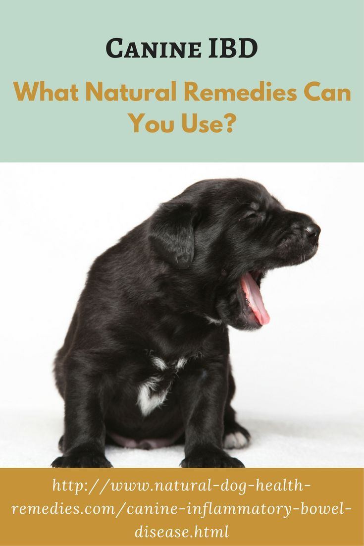 Canine IBD (inflammatory bowel disease) can be painful and messy! Find out how natural remedies such as herbs and supplements can help.