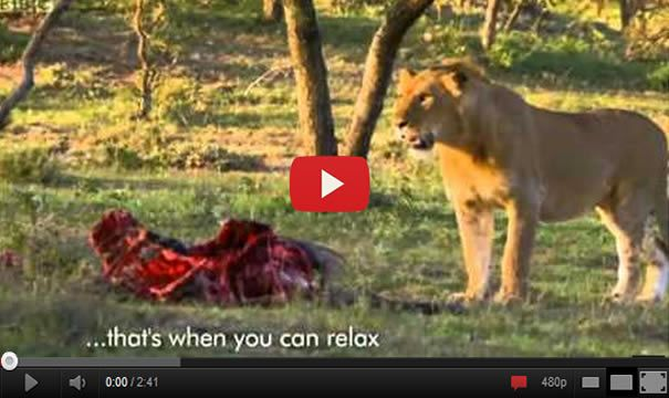This is happening when Men Stealing Food From Lions