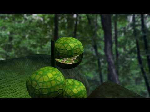 Life cycle of a Fern - animated
