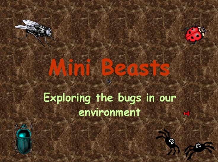 Exploring the bugs in our environment - Fact files on a range of minibeasts.