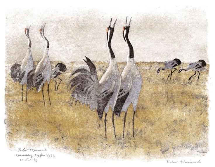 Robert Hainard crane grue