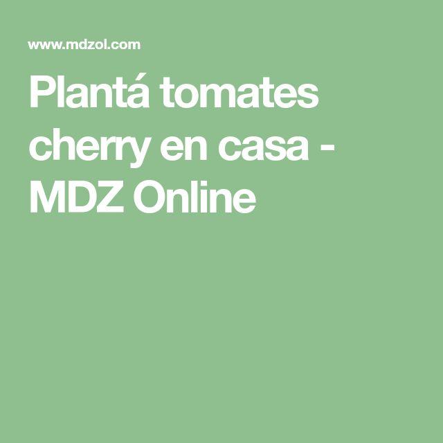 Plantá tomates cherry en casa - MDZ Online