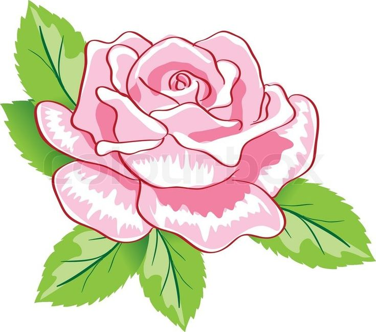 Stock vector of 'Beauty pink rose background. Colorful vector illustration'