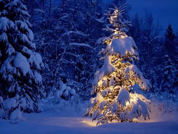 ormanda ışıklı noel ağacı