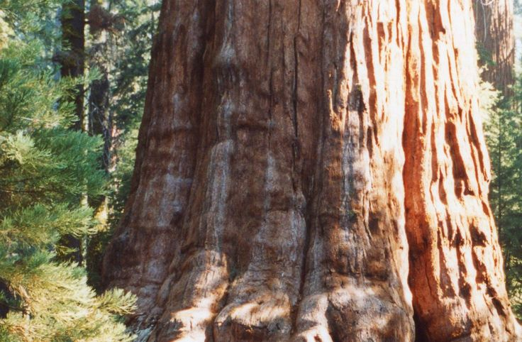 sequoia national park muslim singles Discover (and save) your own pins on pinterest this pin single travelers is just one of the many things you could do on a singles sequoia national park.