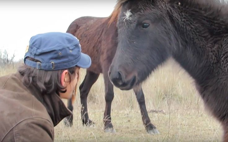 It's a common practice in Romania to bind the front legs of horses tightly so that they are unable to run freely. When Four Paws International vet, Ovidiu, came across two wild horses who had been subjected to this cruel practices, he quickly got to work to set them free.
