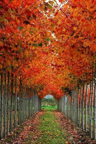 Autumn Tree Tunnel