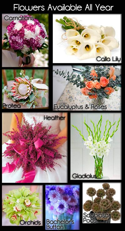 20 best images about care and kinds of flowers on for Flowers that are in season