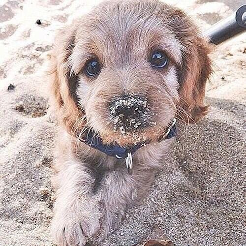 Beach day  Cute Overloads (@CuteOverloads) | Twitter