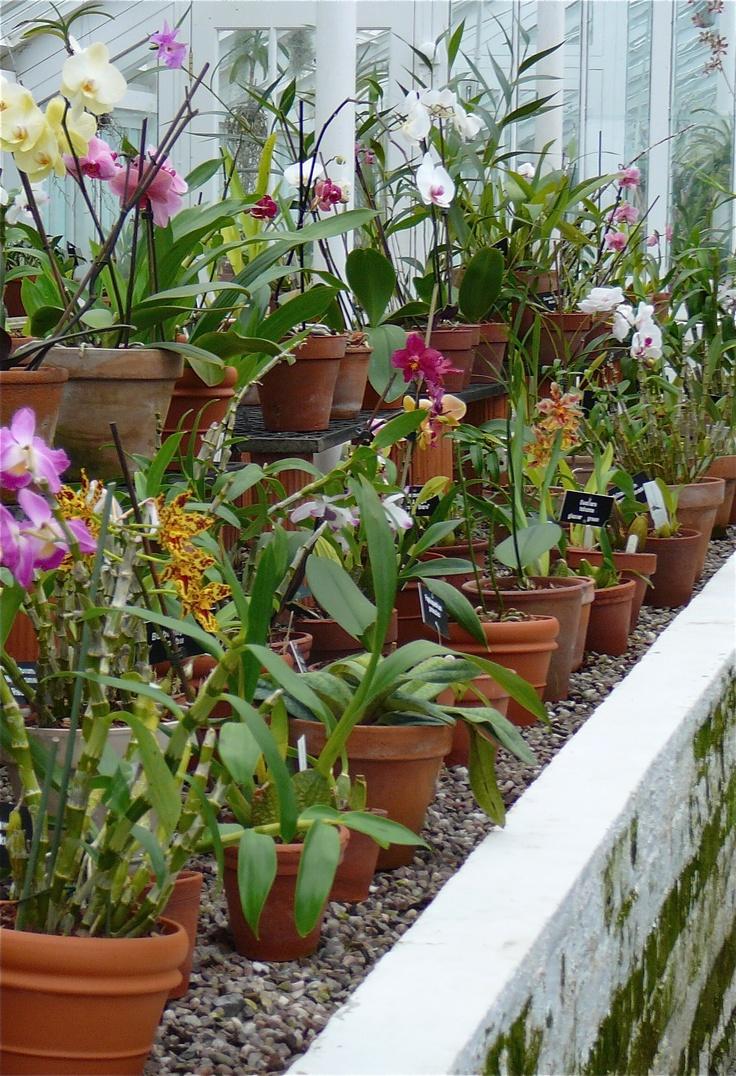 Orchids | Orquídeas | Pinterest