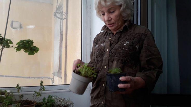 Как сохранить петуньи зимой/Мои советы/Лютики-цветочки ❤