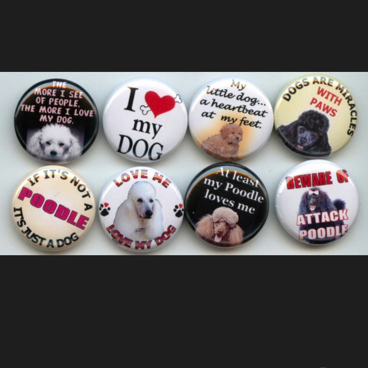 Poodle Dog Breed Lover pinback button set by Yesware11 on Etsy.. Click for details!