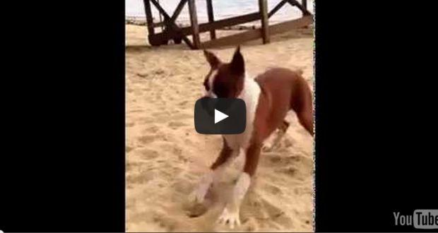 Σκύλος τρώει λεμόνι πρώτη φορά...θα κλαίτε απο τα γέλια (βίντεο) | Kastoras
