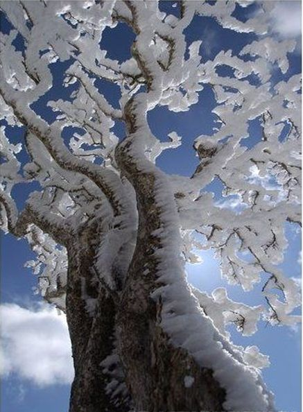 Beautiful Ice Laden Tree