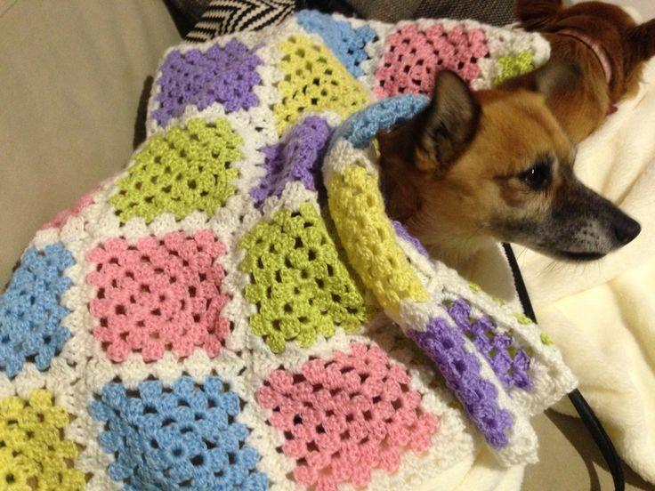 Crochet Baby Blanket (modelled by my dog, Wasabi)