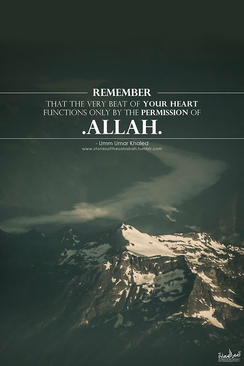 "storiesofthesahabah:  Know that with every beat of your heart, (it) itself remembers and glorifies Allaah. ""Rubb Rubb Rubb.""Subhan'Allaah.So..."