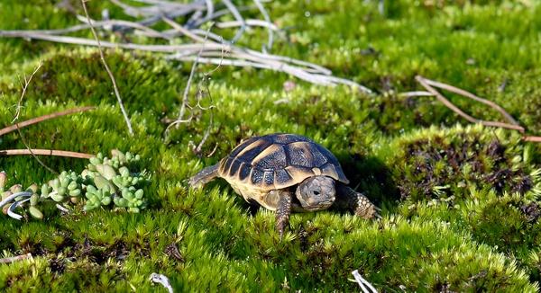 La tortue est devenue un animal de compagnie à la mode : http://www.vozanimaux.com/2012/11/la-tortue-animal-de-compagnie-la-mode.html