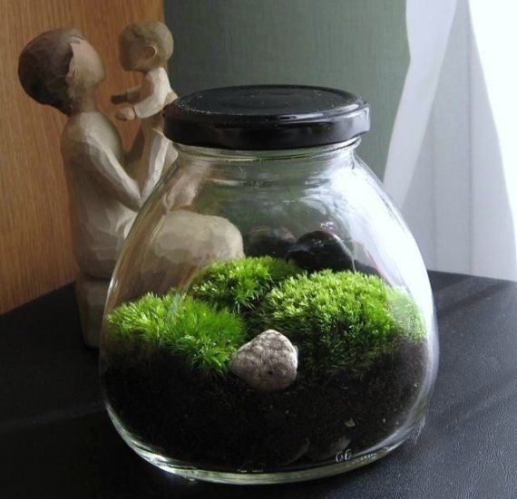 Zen Moss Garden Terrarium inside of a Vintage Art Deco Jar, Great For Apartment, Office, Home