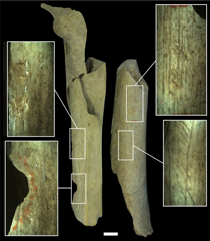 The first evidence of Neanderthal cannibalism in northern Europe is discovered