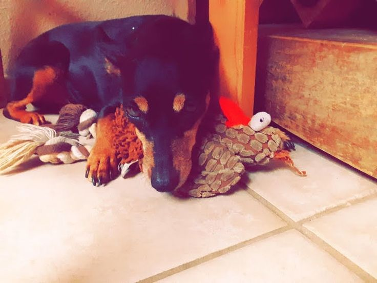Celes A Beaumont Ca Rover Com Dog Daycare Become A Dog Trainer Cat Care