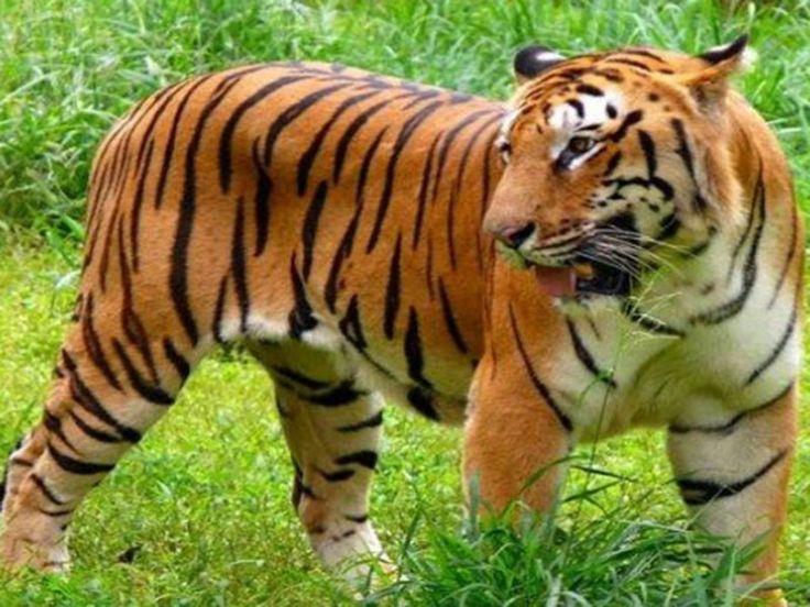 Chikhaldara Wildlife Sanctuary - Amravati, Maharashtra, India
