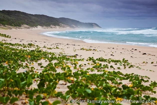 The long beaches of iSimangaliso Wetland Park stretch for more than 250 kilometres