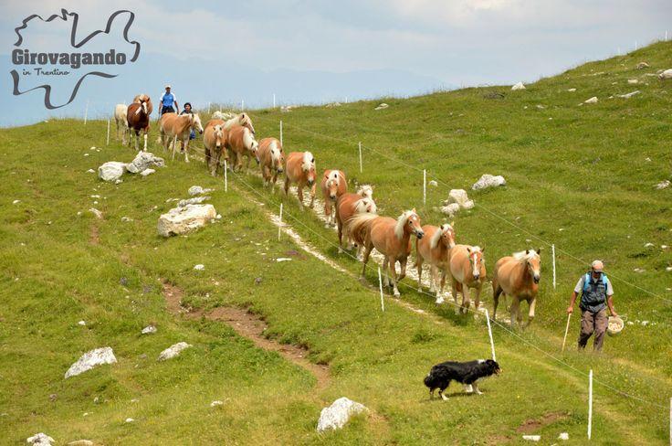 A picco sul lago di Garda, affacciato sulla valle dell'Adige, il Parco Naturale Locale del Monte Baldo comprende circa 4.650 ettari di territori appartenenti a cinque diversi comuni del basso Trentino (Ala, Avio, Brentonico, Mori e Nago-Torbole) e un ventaglio di aree protette situate ad un'altitudine che varia da poche centinaia di metri sul livello del mare a quote più elevate, che superano i 2000 m.