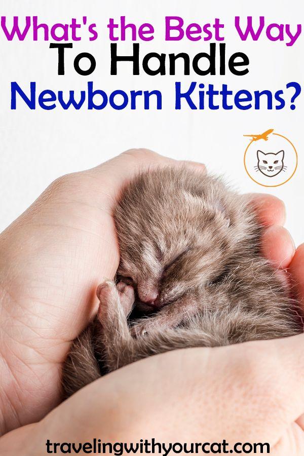 What S The Best Way To Handle Newborn Kittens Newborn Kittens