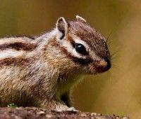 Comment accueillir un #écureuil de Corée ? - #Blog #zoomalia #animalerie sur http://www.zoomalia.com/blog/article/accueillir-ecureuil-coree.html