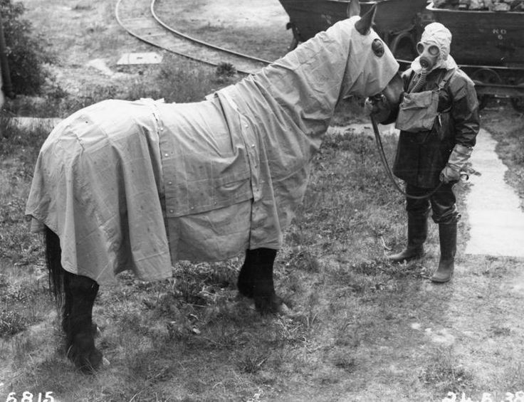 Prototype chemical warfare (gas cape) protection for British Army horses and mules developed at Porton Down, 1938.