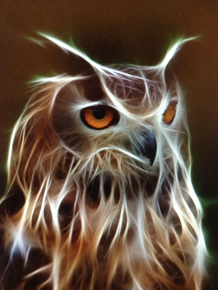 owl. Would love to recreate this with dripping paint