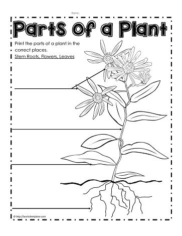 parts of a plant coloring pages | Label the Parts of a Plant | Education-Nature/Sensory ...