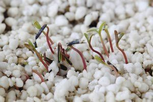 What Is Perlite And How Is It Used In Planting Plants 400 x 300