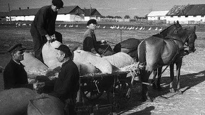 Колхозы в СССР больше всех скупали краденое