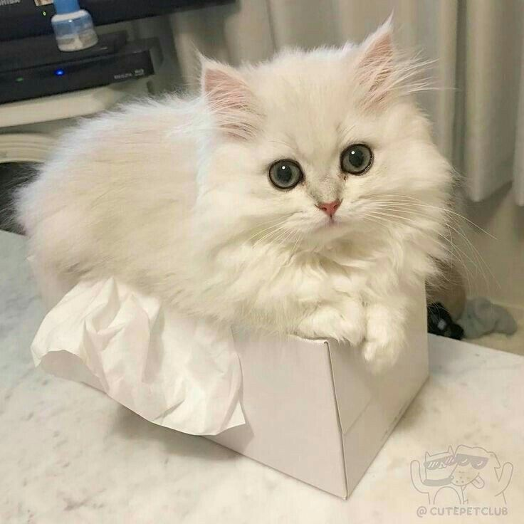Pinterest : Stylixhprincess Follow For More Cute Kittens