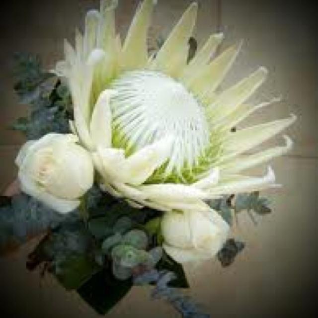 Australian native flower bouquet