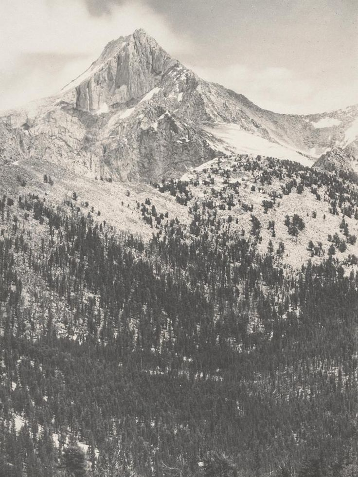 1924 Mount Clarence King, Southern Sierra [peak with snow in crevices, forested lower slopes] by Ansel Adams 77.67.8