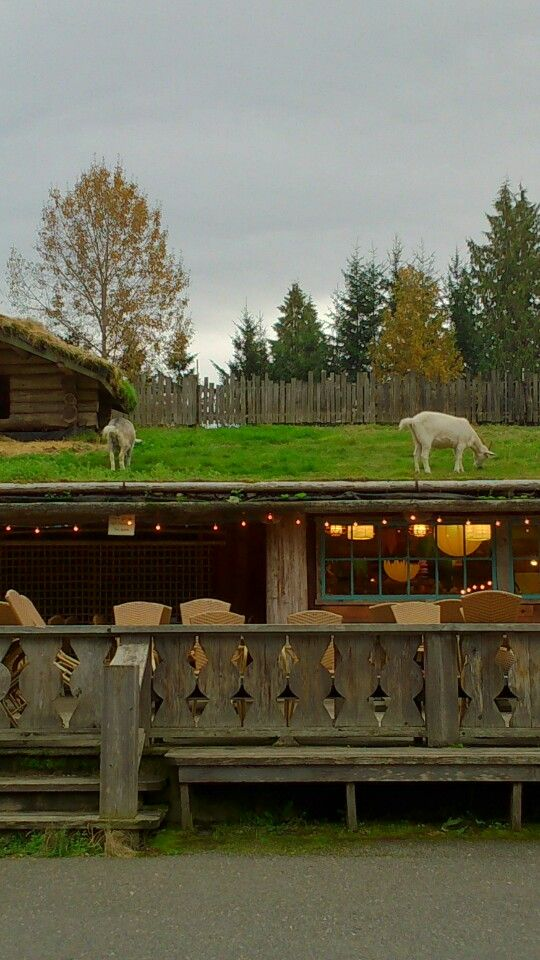 Old Country (Goats on the Roof) Market in Coombs on Vancouver Island!
