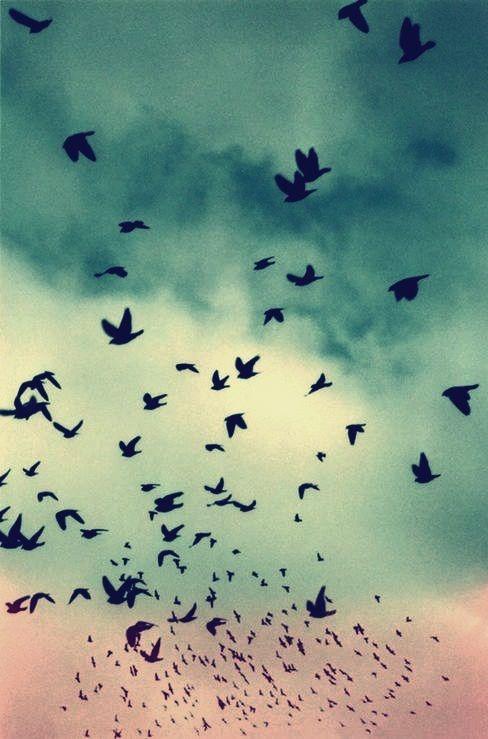 bird, sky, and freedom kép