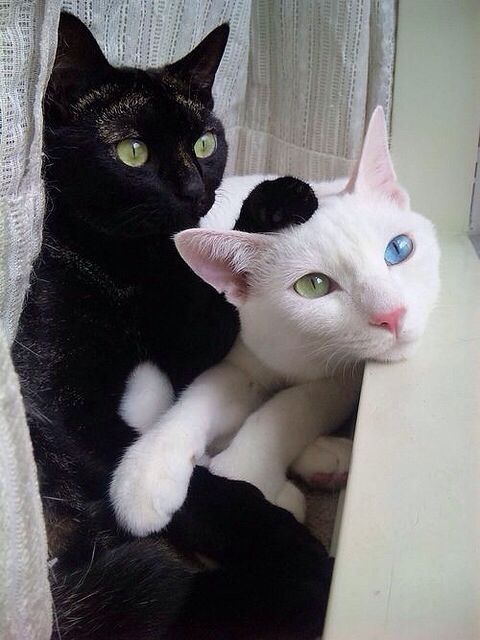 Black Cat Green Eyes White Cat With Blue Green Eyes Cats Black