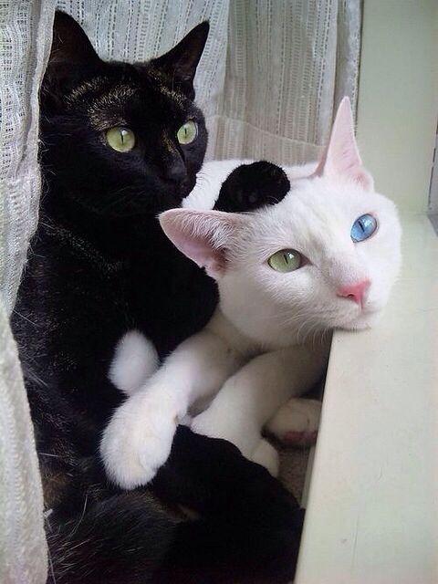 sad cat ears