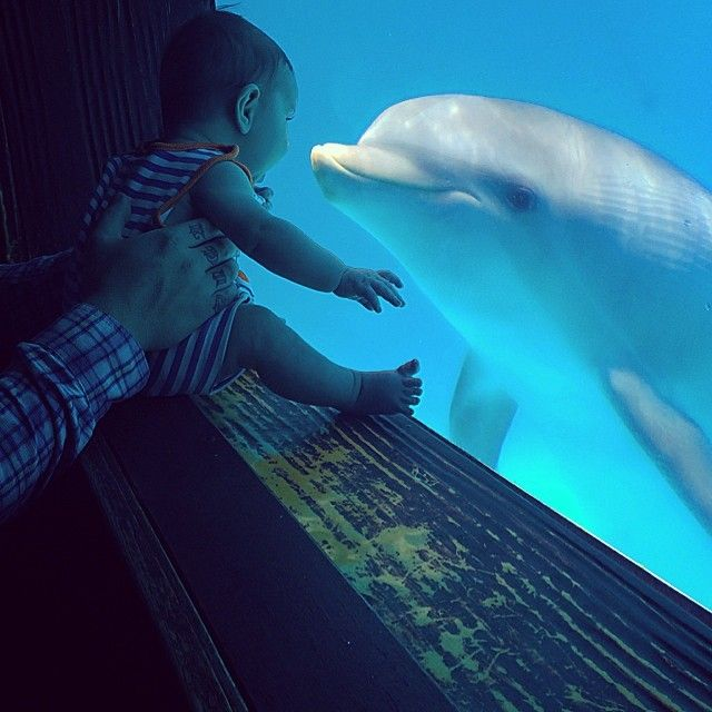 Hope the dolphin absolutely LOVES very tiny guests! Come see her at the Clearwater Marine Aquarium.