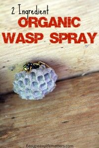 2 Ingredient Organic Wasp Spray. No harmful chemicals so your family and the environment can stay safe!