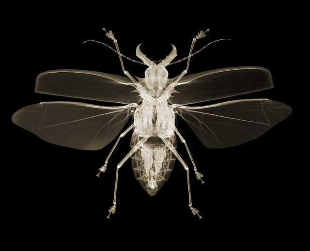 x ray pictures ::: by nick veasey ::: http://www.nickveasey.com/