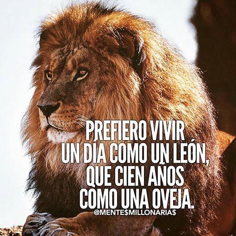 prefiero vivir un dia como un leon que cien años como una oveja a la vida - Buscar con Google