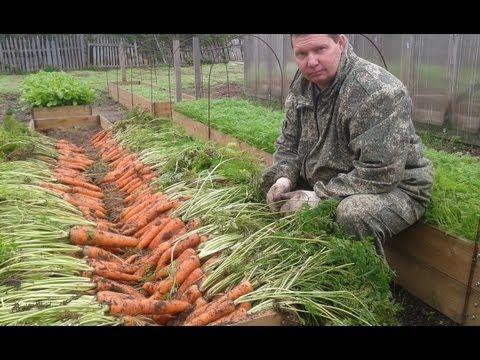 Как вырастить урожайную морковь на высоких грядках - YouTube