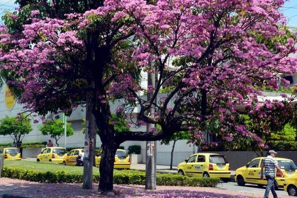 Ibague , Tolima , Colombia